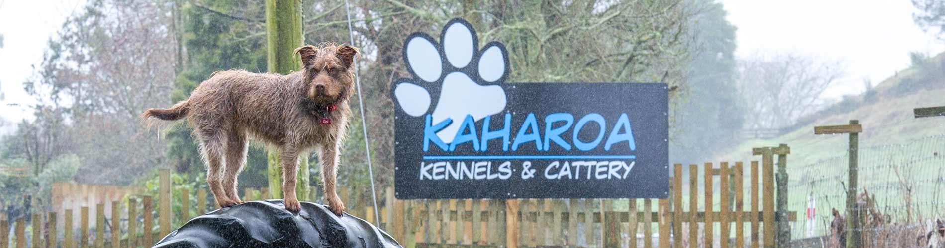 Dog Kennels - kaharoa kennels